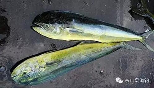 全了~古雷海鲜市场常见鱼类